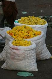 Madurai marigolds